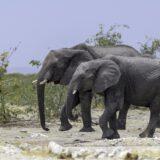 elephants-5889403_1920